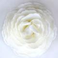 A'marie's Bathing Petal Flowers Velvet Dream Peony