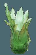 Botanics - Borneo Emilio Robba