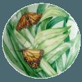 Butterfly Box, Monarch
