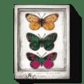 107 Flutter