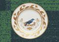 195 Voliere Grimpereau Bleu